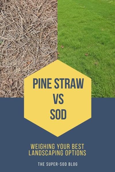 Pine Straw vs sod