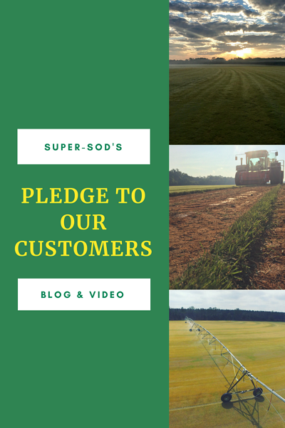 Pledge to our customers