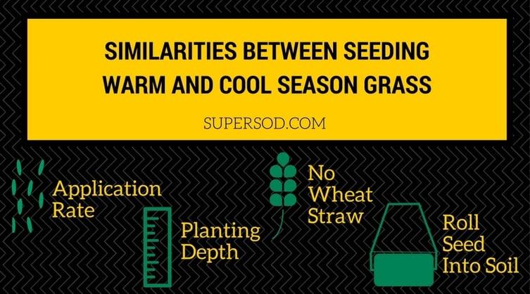 4 Similarities Between Seeding Warm-Season Grass and Cool-Season Grass