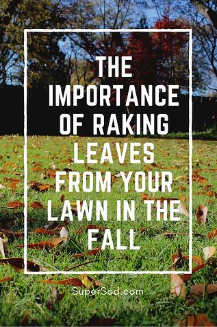 The importance of raking leaves for lawn health.jpg