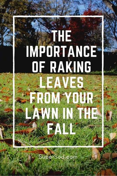 Super-Sod blog - importance of raking leaves for lawn