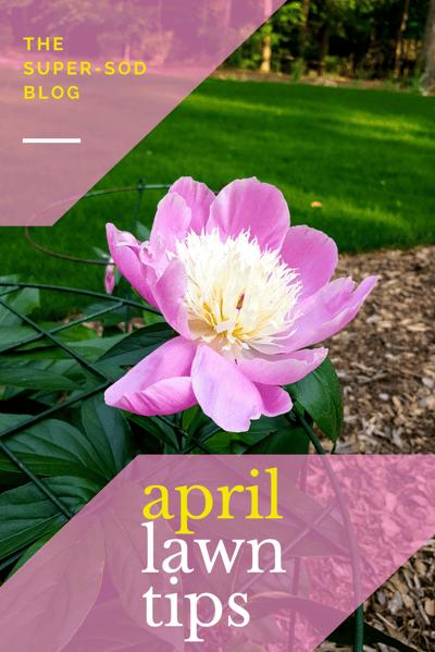 april lawn tips