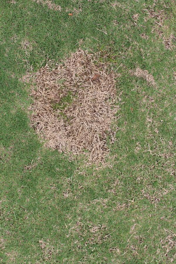 bare dead spot in lawn