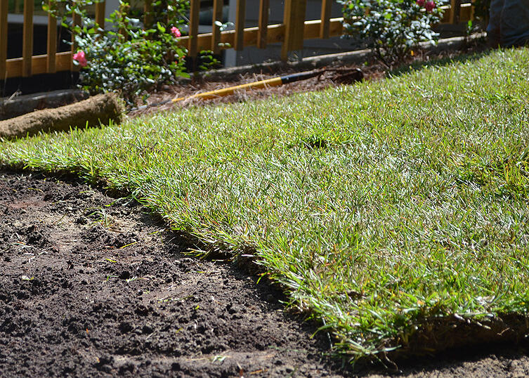 Questions to Ask During Your First Growing Season with a New Lawn