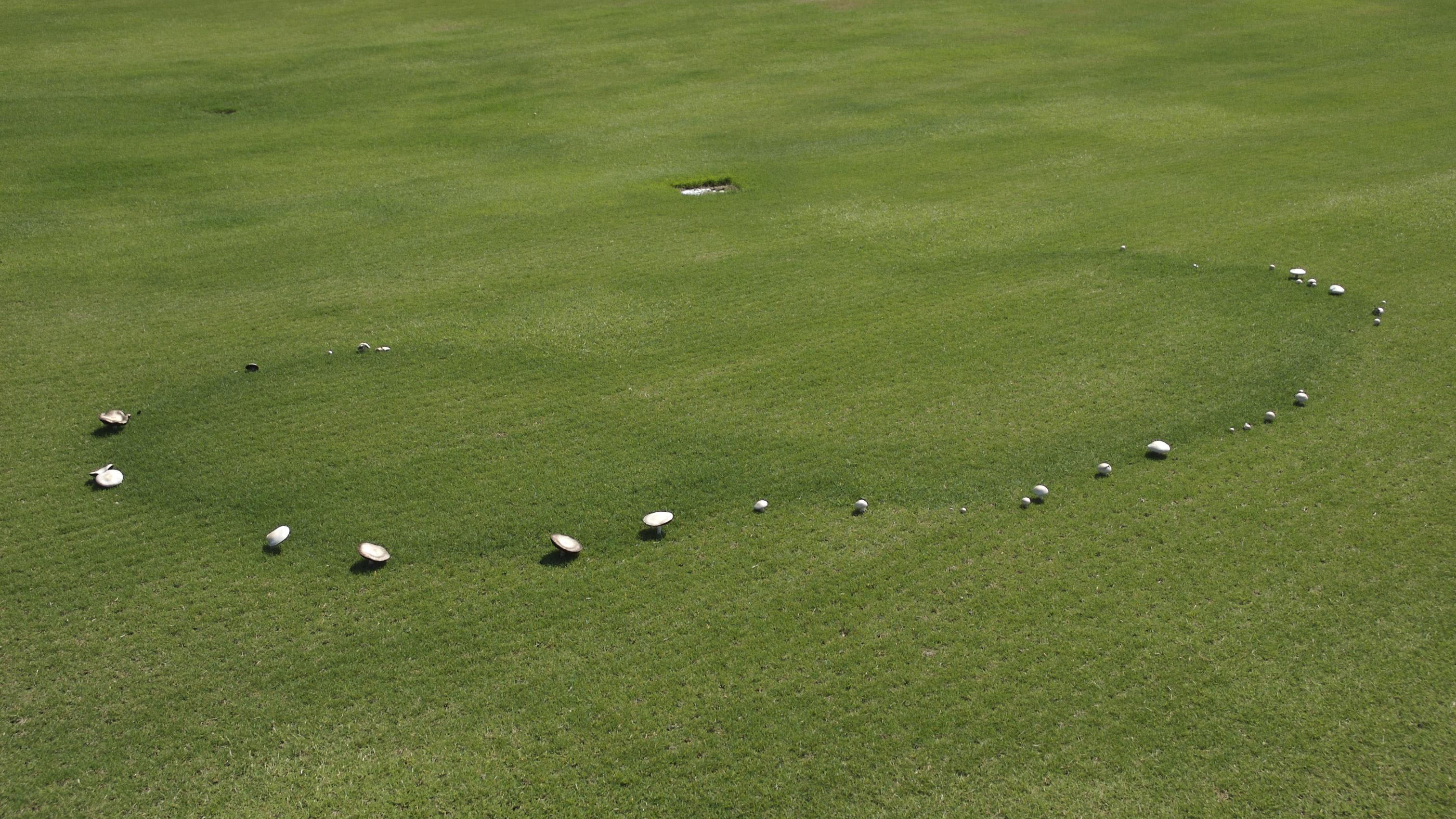 fairy-ring-bermudagrass-signs-mushrooms_NCSU