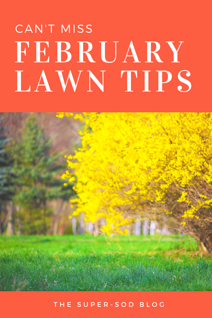 february lawn tips.png