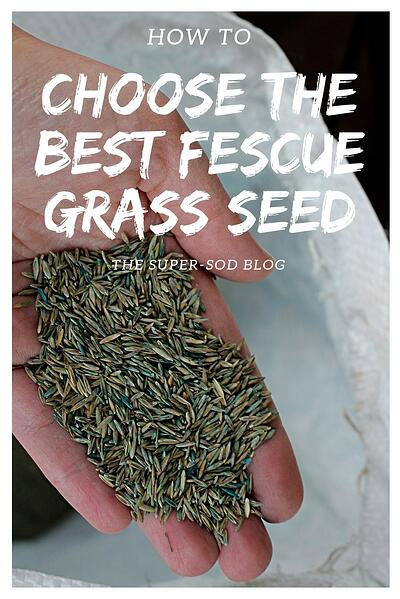 how to choose the best fescue grass seed