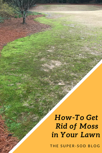 Super-Sod blog - how to get rid of moss in your lawn