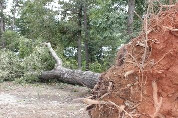 hurricane-irma-cleanup-fallen-tree.jpg