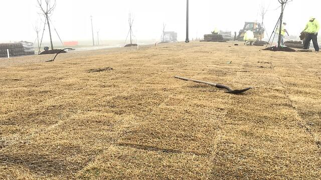 Laying Sod in the Winter - featured image