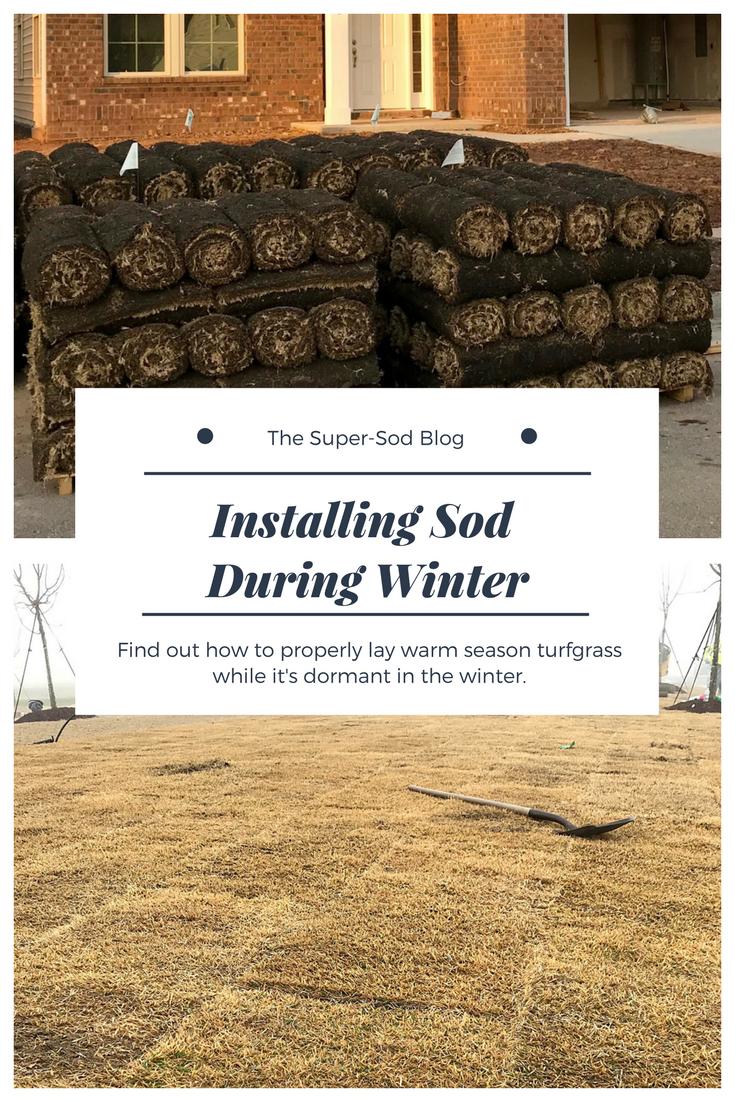 installing sod in winter.png