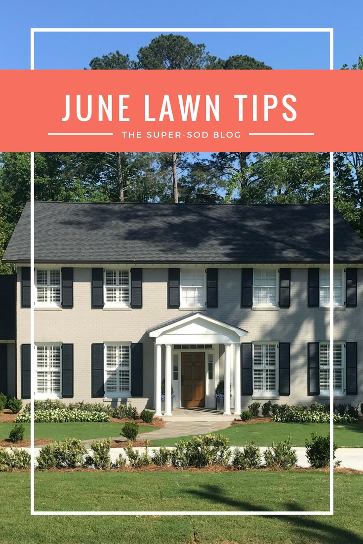 june lawn tips