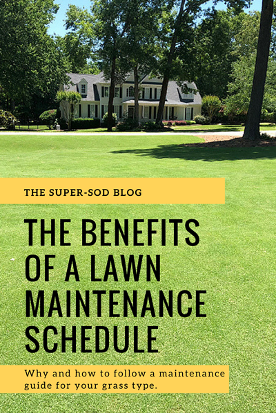 lawn maintenance schedule