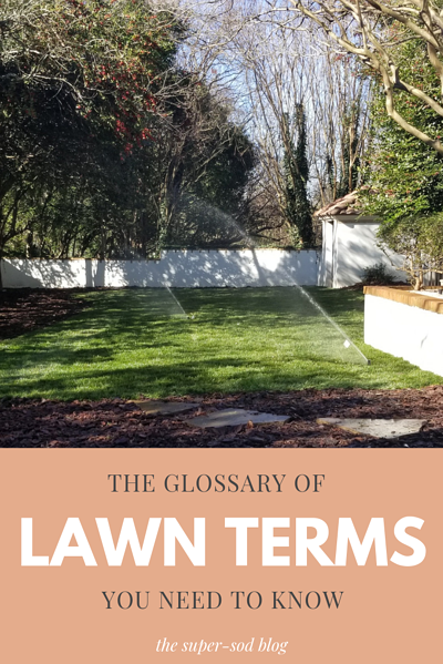 lawn term glossary