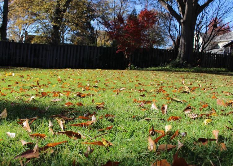 Why Is It Important to Rake Fall Leaves from the Lawn?