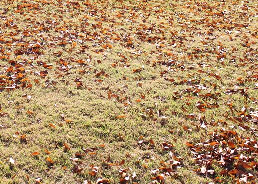 leaves_on_the_lawn_2.jpg