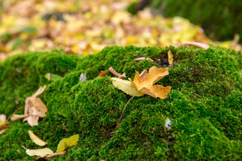 moss and leaves