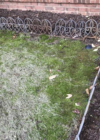 moss on the edge of the lawn