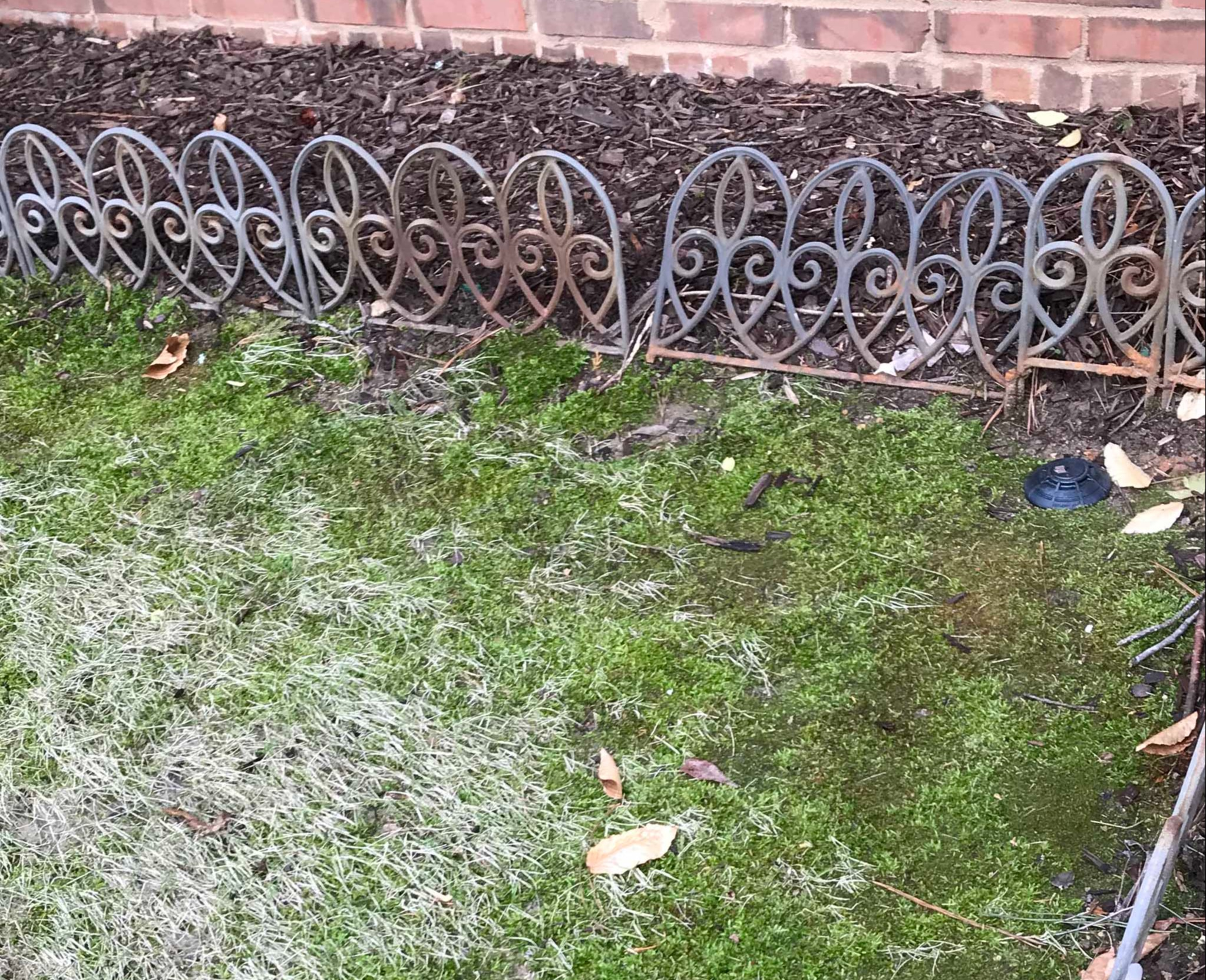 How To Kill Moss In Lawns