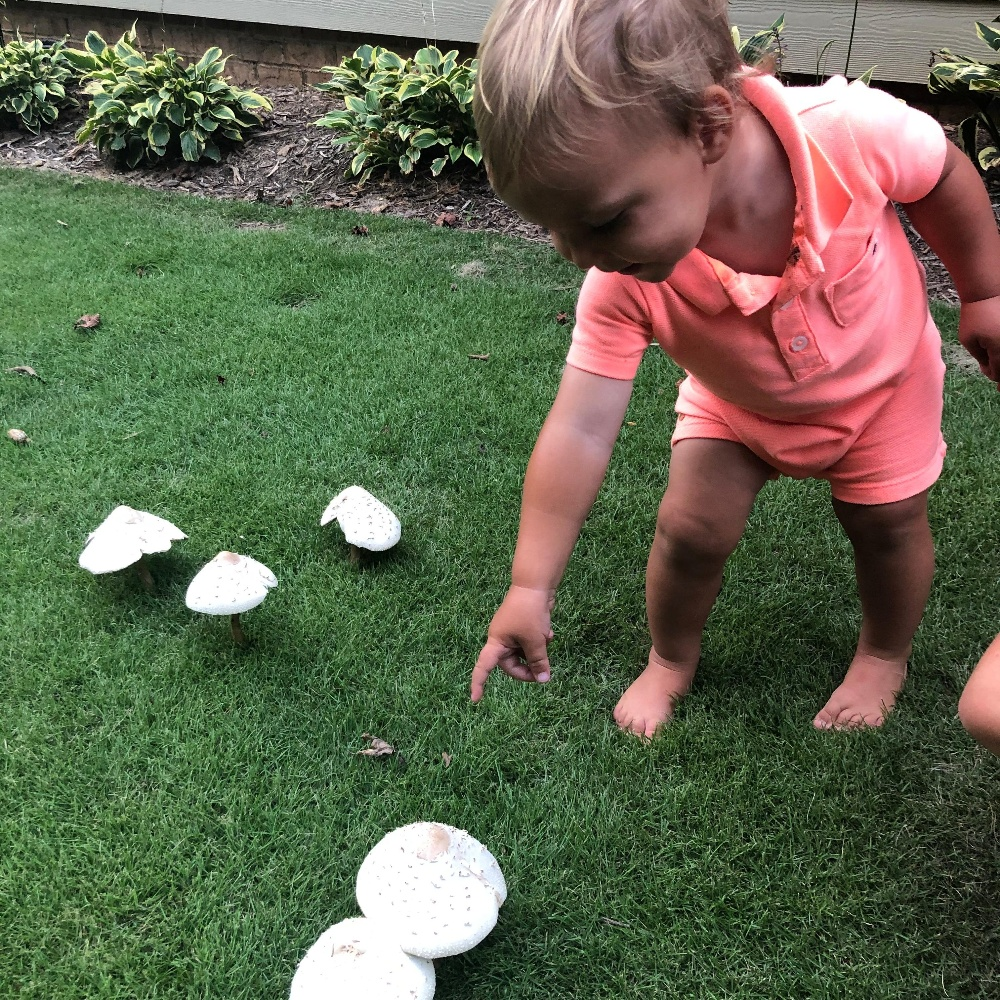mushrooms in the lawn - good or bad-1