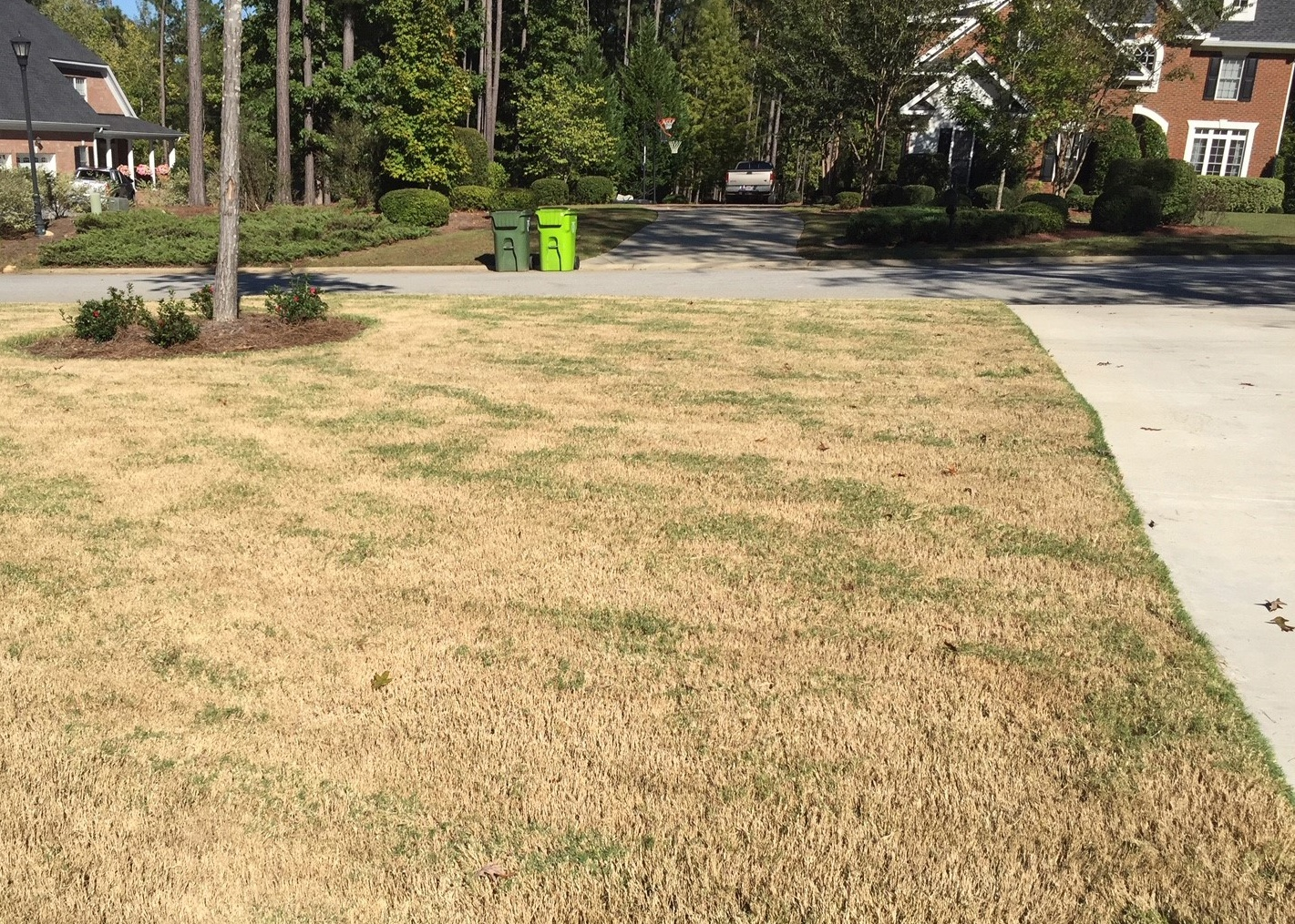 scalped_bermuda_grass_lawn