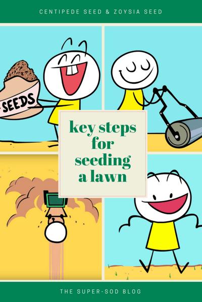 steps for seeding a lawn