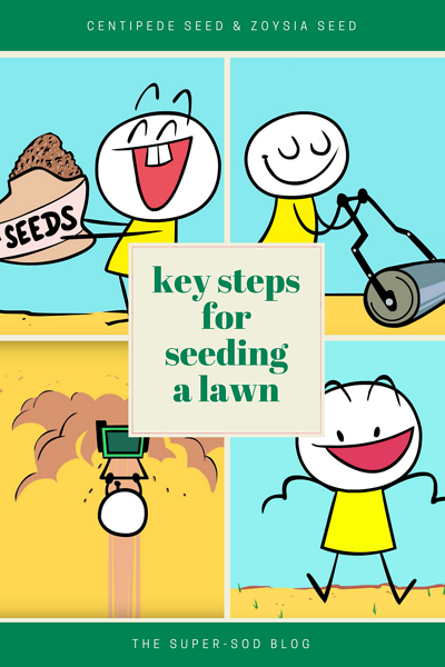 steps for seeding a lawn