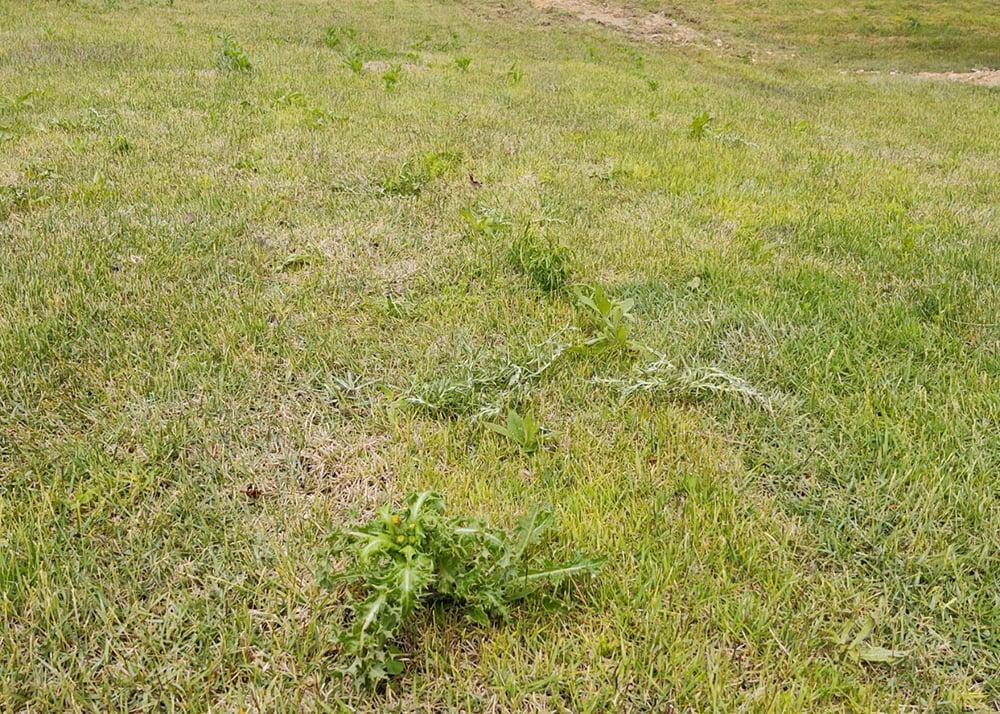 weeds in seams mow