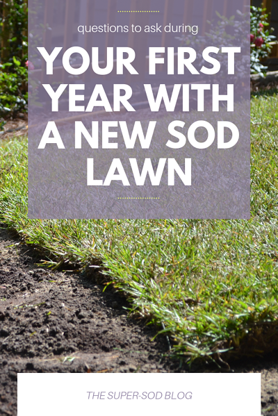 your first year with a new sod lawn
