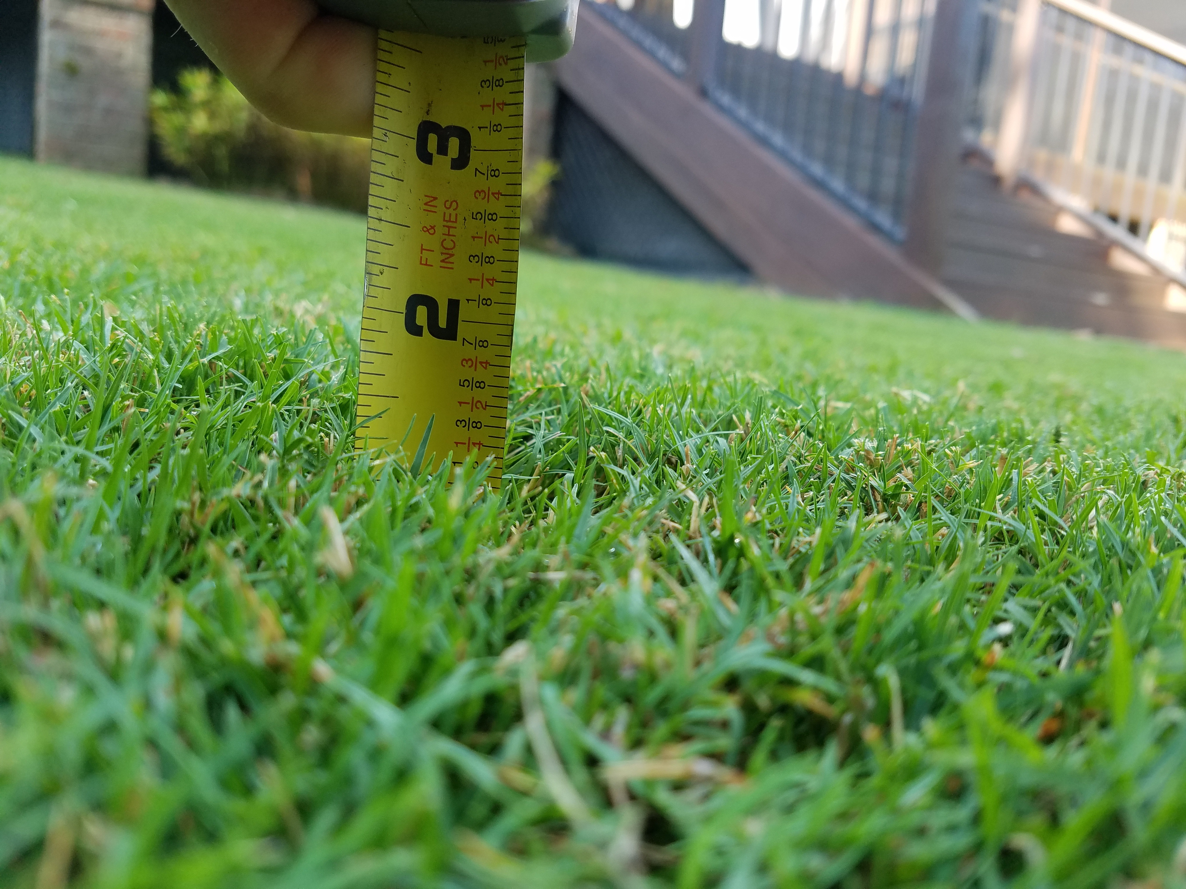 grass mowing height TifGrand