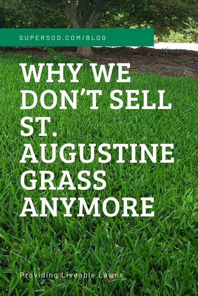 WHY WE DON'T SELL ST. AUGUSTINE GRASS ANYMORE (1)
