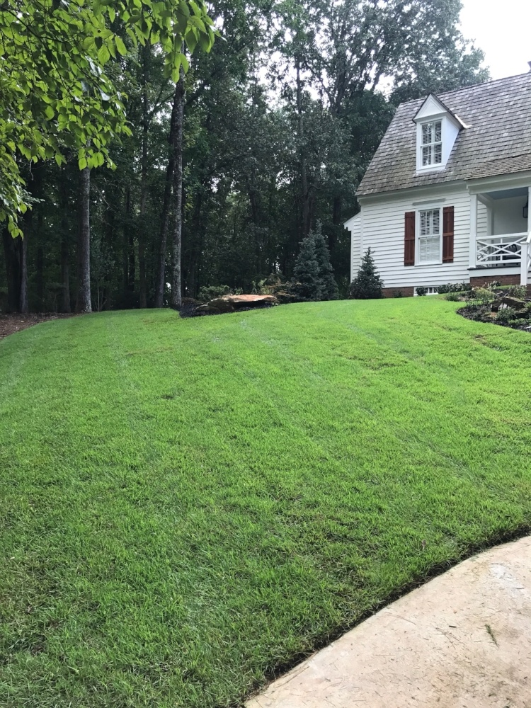 Zenith Zoysia installed by homeowner