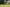How and When to Dethatch a Lawn - featured image