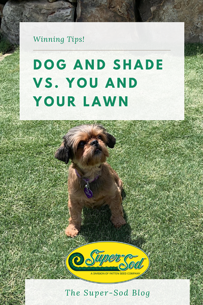 Super-Sod blog - dog and shade vs you and your lawn