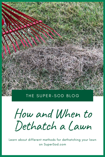 how and when to dethatch a lawn