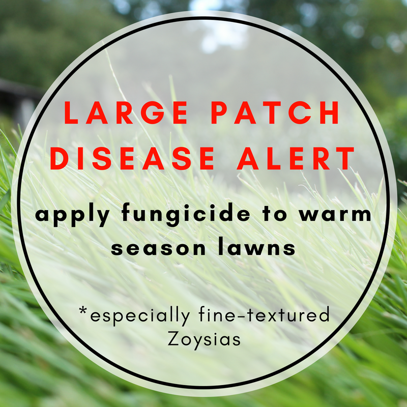 large_patch_disease_alert_november_zoysia.png