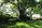 Why it's Hard to Grow Sod in Shade & How to Help Your Lawn Grow Better - featured image