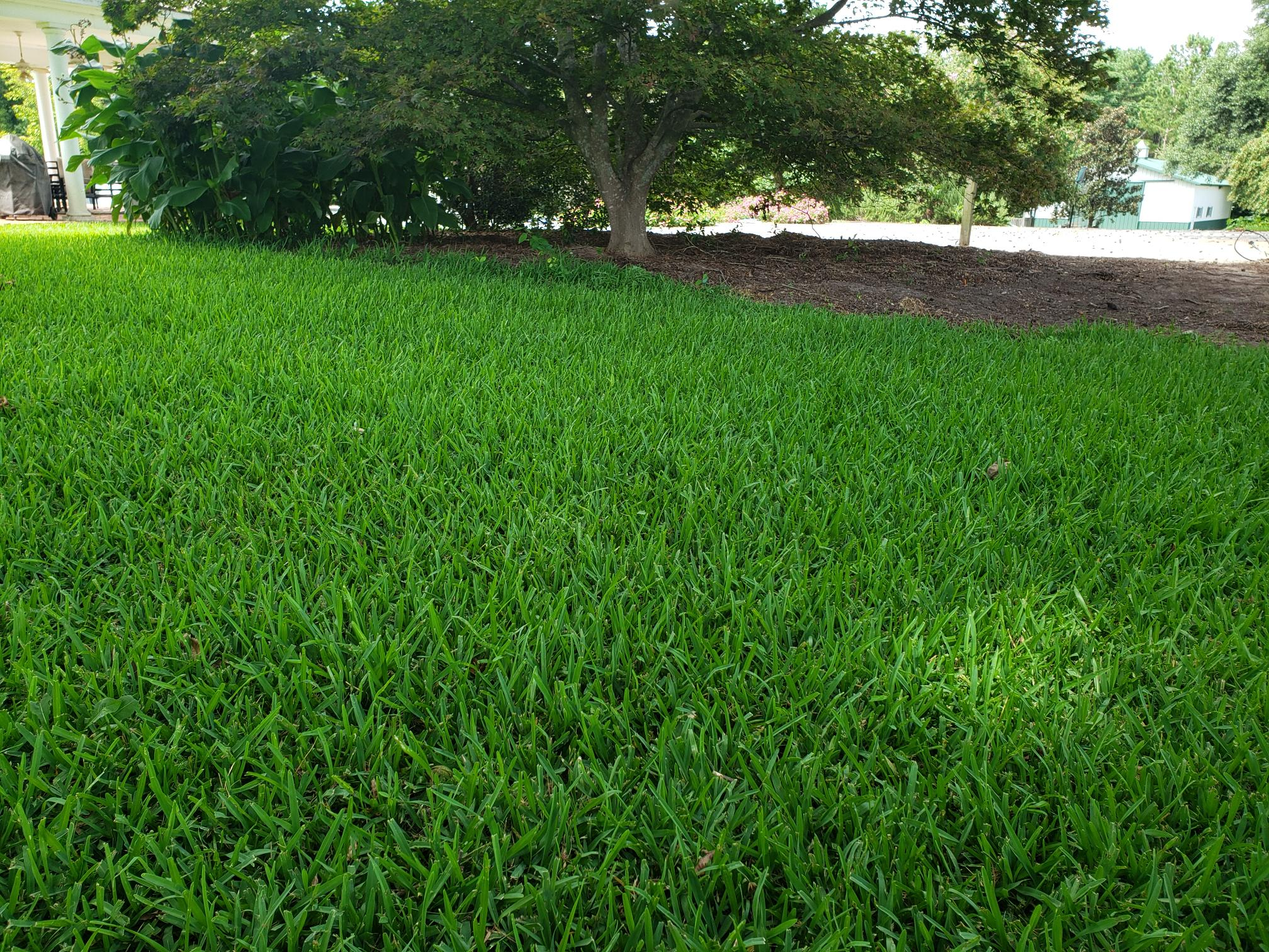 Curious why we don't sell St. Augustine grass anymore? - featured image