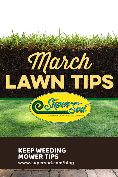 tall fescue lawn tips topdressing a lawn fall armyworm alert keep weeding warm season lawns customize your robot-1