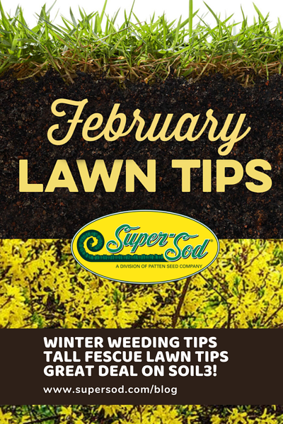 tall fescue lawn tips topdressing a lawn fall armyworm alert keep weeding warm season lawns customize your robot